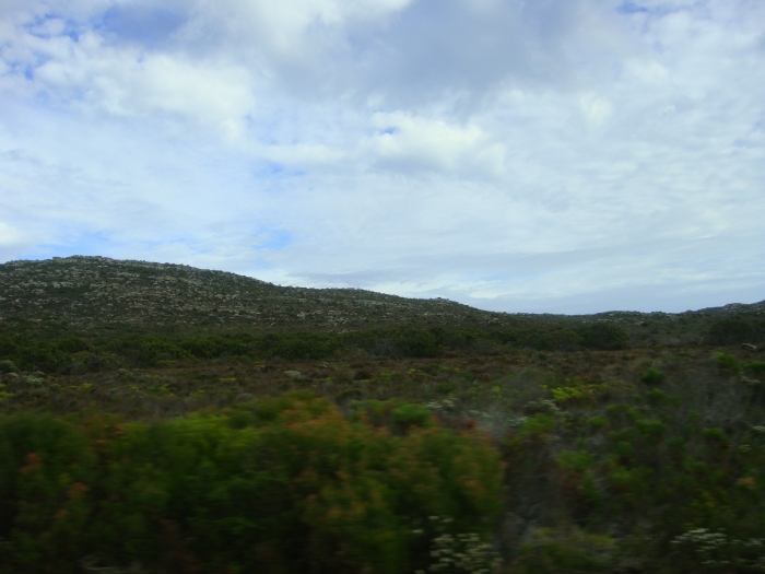 The Cape of Good Hope Nature Reserve