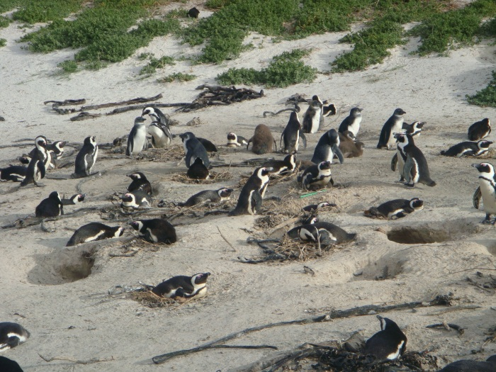 The penguin colony!