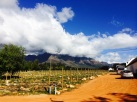 En-route to the vineyards of Stellenbosch