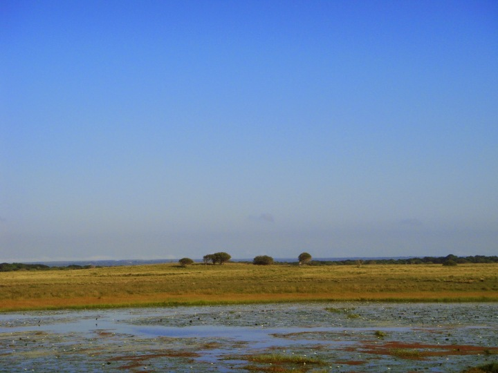 The wet lands