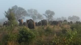 It was a massive herd