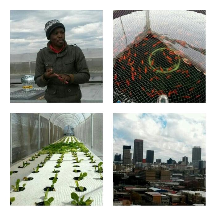 Malibongwe from Bjala explaining the sustainable farming project