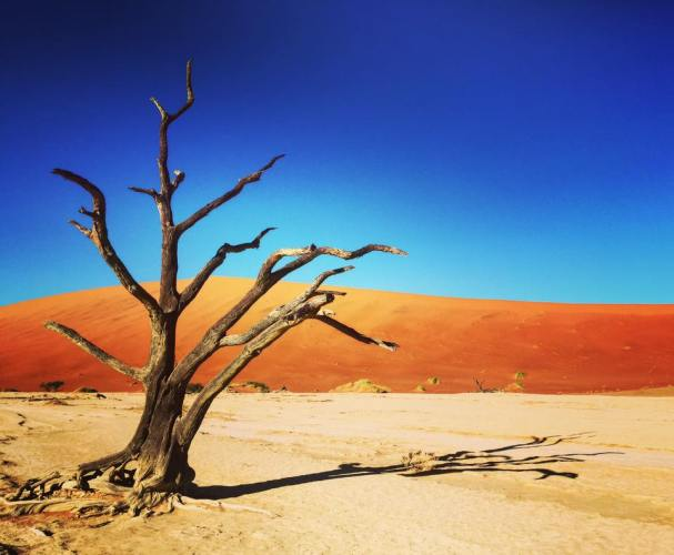 Breathtaking deadvlei